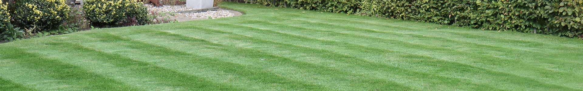 Results of Feed & Weed Lawn Treatment