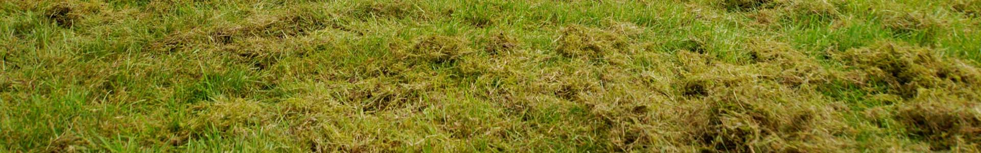 Scarification of Lawn